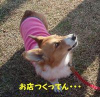 Photo_31